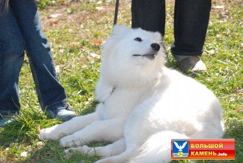 Выставка собак! (25 фото)